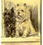 A pair of Cairn terriers from Valentines & Sons Tailwagger postcard series.