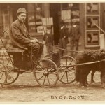 In the Dog Cart
