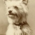 Notman CDV dog photograph c1890s