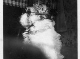 Archibald models the new Night Vision Squirrel glasses