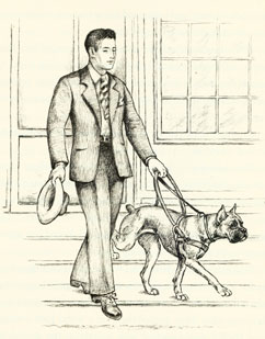 The boxer guide dog from the book Vicki, A Guide Dog.