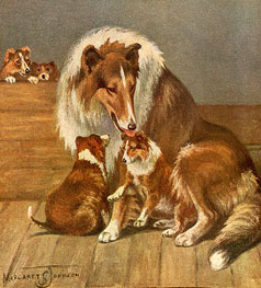 From Scottie, The True Story of a Dog written by M Benson Walker, colour illustrations of a Collie with her pups.