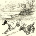 Jester the Springer Spaniel, and Fleet the Greyhound from the 1937 A Spaniel of Old Plymouth.