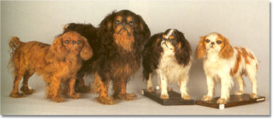 Taxidermy King Charles Spaniels